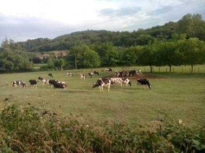 Incontro tra sindaci mugellani e produttori di latte