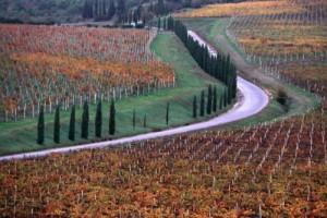 ToscanaVigneti