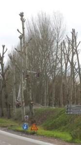 taglio alberi ciclabile
