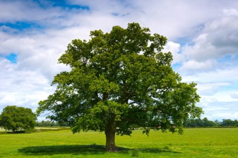 Un albero in più