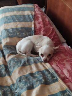 Scomparsa canina a Senni